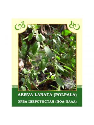Aerva Lanata (Polpala) 35